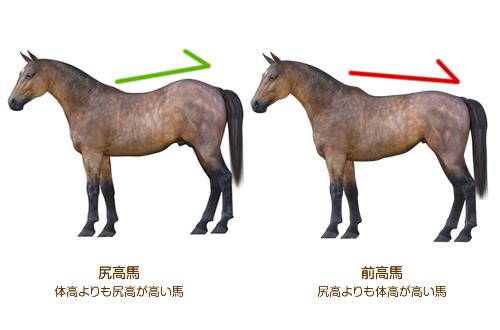 さまざまなプロポーションの見方【馬体の見かた講座】 :: 一口馬主DB